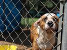 Picture for Atlanta Humane Society rescues 45 dogs from outdoor, muddy pens in south Georgia
