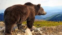 Cover for Missing Alaska hiker found alive after bear attack