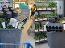 Picture for Barling resident's petition asking Walmart to donate plants reaches over 79k signatures