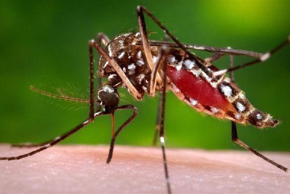 Picture for Mosquitoes at Wyassup Lake, Bell Cedar Swamp test positive for West Nile Virus