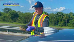 Cover for Airborne Turtle Flies Through Car's Windshield On Florida Turnpike