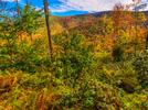 Picture for NYS acquires 8,000 acres of land in St. Lawrence County