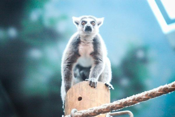 Picture for Henry Vilas Zoo falls short on conservation mission, raising questions on place in Madison community