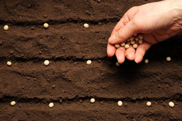 Picture for How To Save Seeds from the Garden