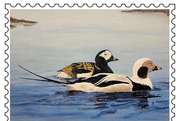 Picture for Stockton Springs Artist Wins 2021 Maine Waterfowl Stamp Contest