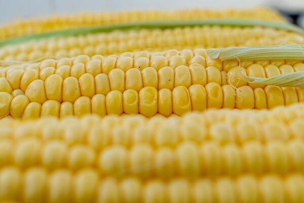 Picture for MAKE IT: Corn Chowder