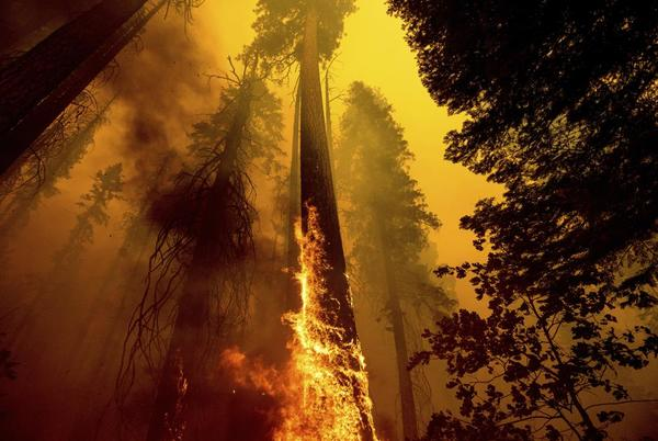 Picture for 4 famous giant trees unharmed by Sequoia National Park fire