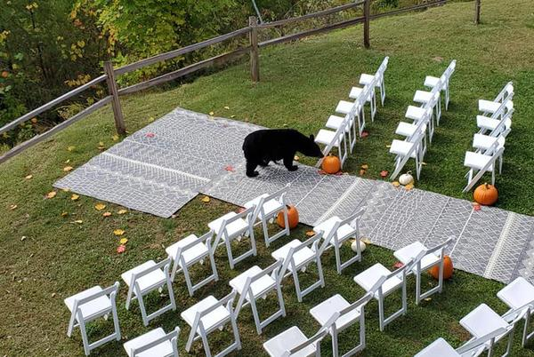 Picture for Couple sees four-legged, furry wedding crashers in Wears Valley