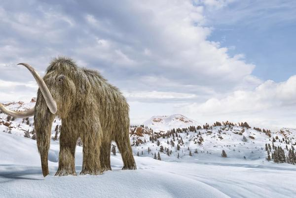 Picture for Scientists Say They Could Bring Back Woolly Mammoths. But Maybe They Shouldn't