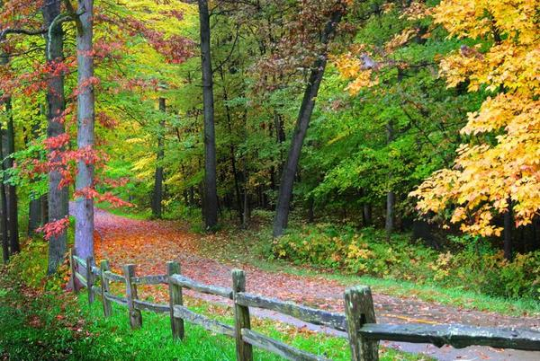 Picture for Now's the time to celebrate autumn in Michigan