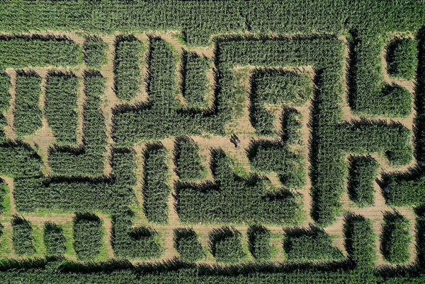 Picture for Louisiana Corn Maze Announces Fall Opening
