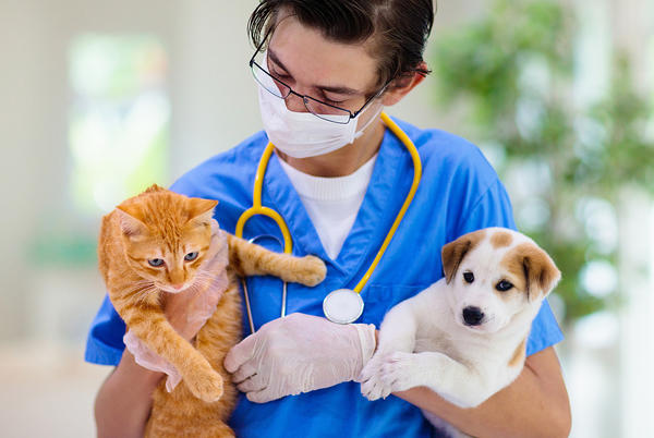 Picture for Hudson Valley Animal Rescue to Bring Discounted Vet Exams and Services