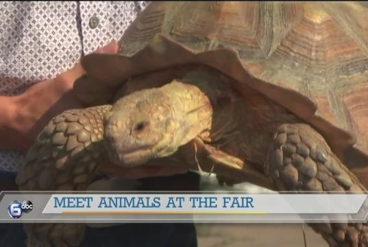 Picture for Meeting animals at the Tennessee Valley Fair