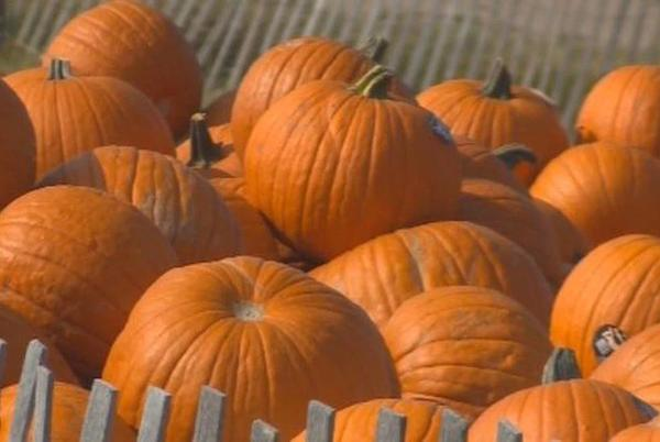 Picture for Riverview Christmas Tree Farm to Hold Annual Pumpkin Festival Starting this Weekend