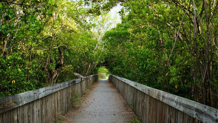 Cover for Where to find the best hiking trails in Miami