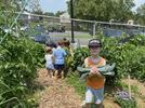 Picture for Oakbrook garden is cultivating community