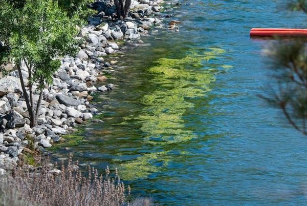 Picture for Stay out of the water: Officials issue warning as Pyramid Lake nears reopening