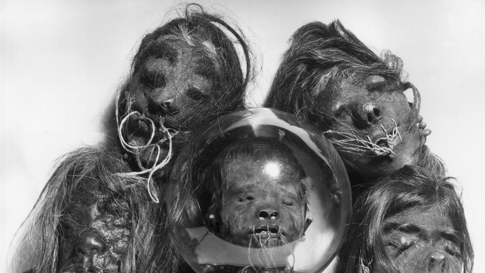 Picture for Study finds shrunken head prop used in 1970s John Huston film is actually a real human head