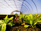 Picture for August Commercial Horticulture Program