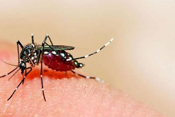 Picture for IAF officer tests positive for Zika virus in Kanpur