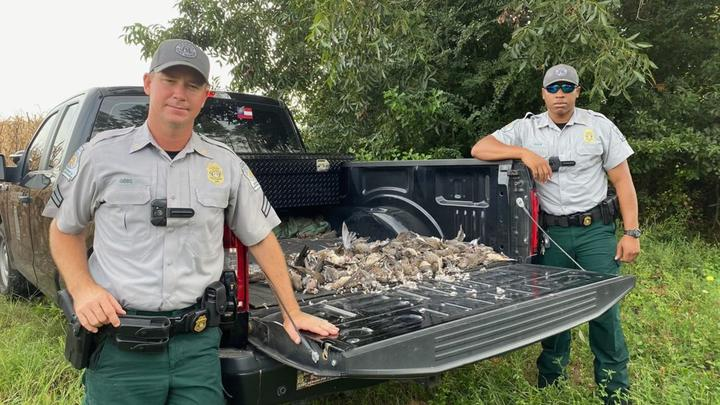 Cover for Georgia game wardens confiscate 157 illegally baited doves
