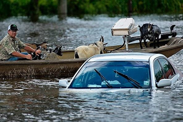 Picture for Rockford BBB Warns Of Flood Damaged Cars Being Sold In Illinois