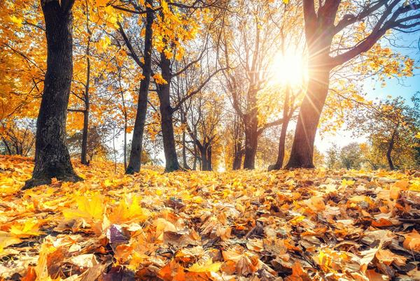 Picture for Autumn equinox: When is the first day of fall 2021? What you need to know.