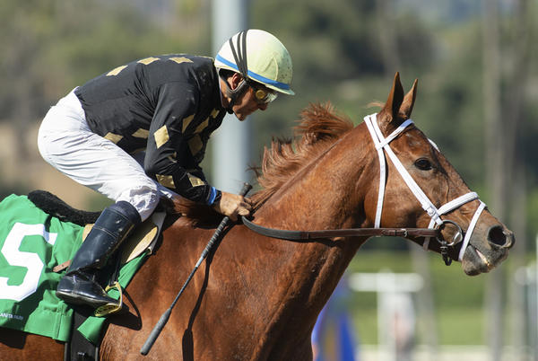 Picture for Ce Ce Effortless In Chillingworth Stakes At Santa Anita