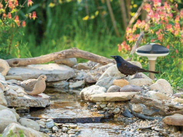 this-smart-sensor-gives-you-a-first-row-seat-to-birds-singing-in-your-backyard