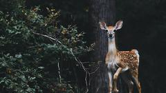 Cover for 'Zombie Deer' Found Close to New York State Border
