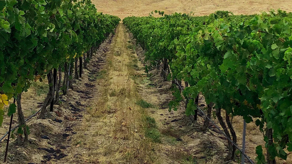 Picture for New Idaho Wineries You Have to Visit This Summer