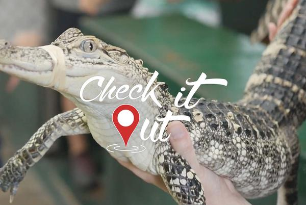Picture for Arkansas Alligator Farm & Petting Zoo | Check It Out! Hot Springs National Park, Arkansas