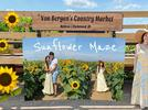Picture for 13 Sunflower Fields in Illinois You'll Love