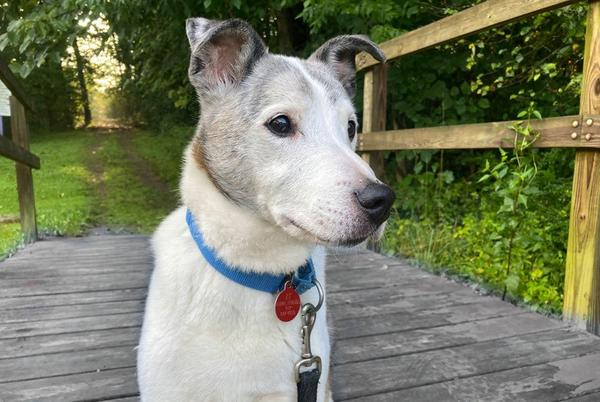 Picture for Pittsburgh Pet of the Week: Hawn