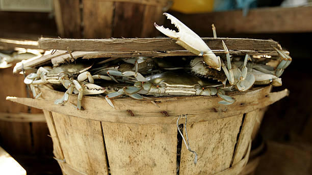 Picture for Best places to go crabbing in Baltimore