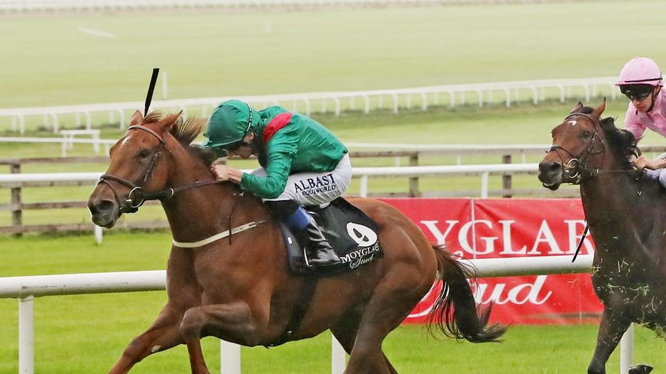 Picture for Dermot Weld adopting patient approach with star performers