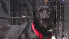 Cover for Detroit Dog Rescue in desperate need of food, cleaning supplies, other items for pets -- How to help