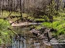 Picture for Fort Daniels Conservation Area hosting upcoming Creek Walk