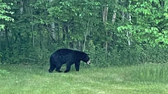 Cover for Southern Wisconsin bear sightings prompt DNR warning