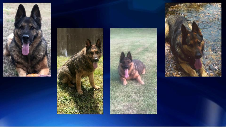 Picture for Floyd County police say goodbye to beloved K9 officer