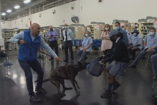 Picture for Cincinnati ranks 14th in dog attacks on postal workers