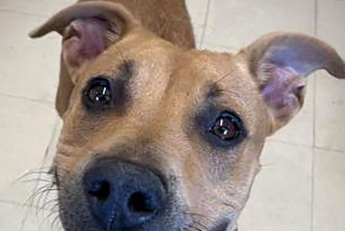 Picture for Pet of the Week: Oakley