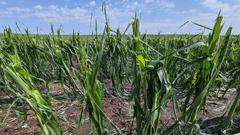 Cover for Storms batter crops, damage homes in eastern Iowa