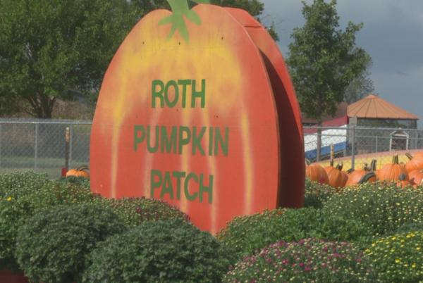 Picture for Roth Pumpkin Patch seeing good 2021 harvest