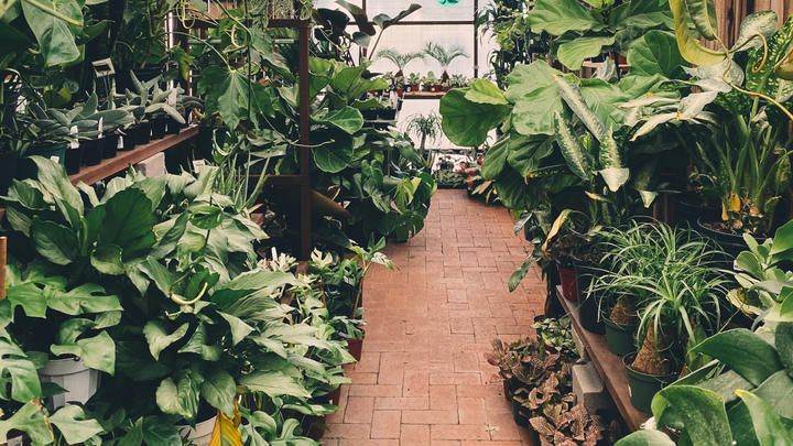 Cover for Three of the best boutiques plant shops in Denver