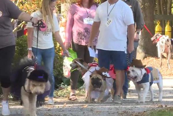 Picture for UT Gardens host 8th annual 'Howl-O-Ween' pooch parade
