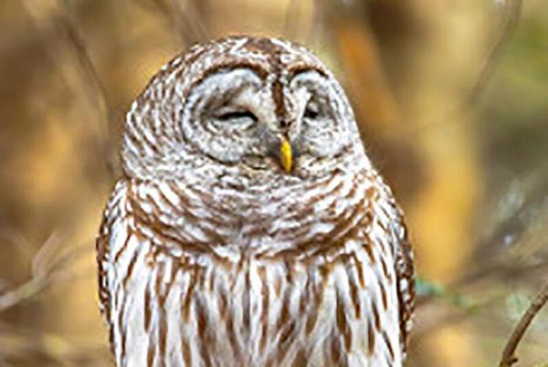 Picture for Audubon Society of R.I. announces nature programs