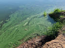 Picture for Willow Creek Reservoir near Granby closed due to potential toxic algae