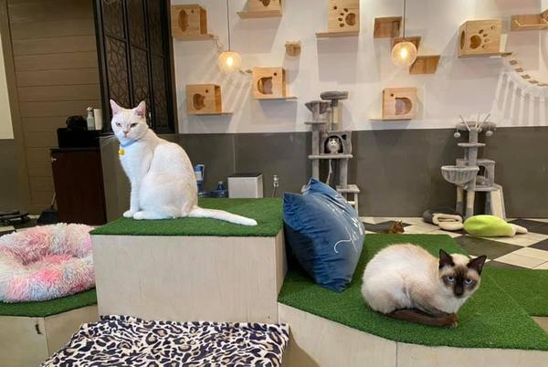 Picture for A cat lovers paradise is now open in Bryan