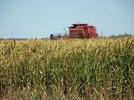 Picture for EPA approves chemical warfare against fall armyworms in Arkansas fields